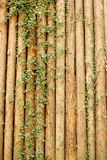Abstract brown wood background with plant Stock Photo
