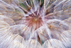 Abstract burst of a dandelion parachute ball Stock Photo