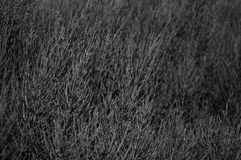 Abstract bush background horizontal in bw Stock Photography