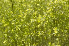 Abstract bush leaves unfocused spring background stock images