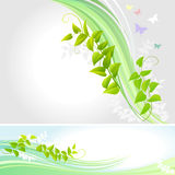 Abstract Butterflies And a Creeper - Vector Stock Photo
