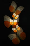 Abstract of butterflies with zoom Stock Image