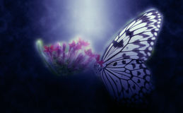 Abstract butterfly on flower Stock Photo
