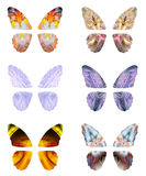 Abstract butterfly wings Stock Photos