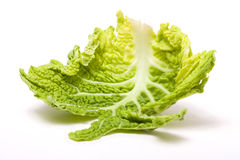 Abstract Cabbage Leaf Royalty Free Stock Image