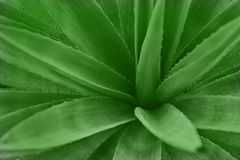 Abstract cactus plant Stock Photography