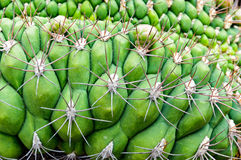 Abstract cactus plant Royalty Free Stock Photography