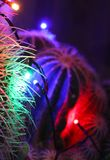 Abstract cactus spines lit by Christmas lights. Cactus plant light by coloured red, purple and green Christmas lights stock photography