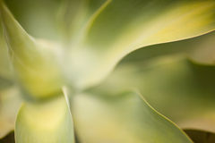 Abstract Cactus Succulent Royalty Free Stock Image