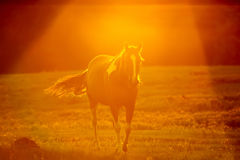 Abstract camera effect of a horse on a farmland Royalty Free Stock Photography