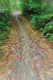 Abstract forest. Abstract in-camera zoom motion blur of a forest path in autumn Royalty Free Stock Images