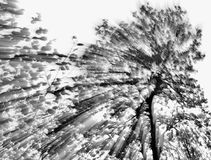 Abstract tree. Abstract in-camera zoom motion blur of a tree in black and white Stock Photos