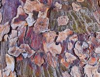 Abstract Camouflage Bark Pattern. A natural abstract pattern; heavily textured and layers bark on tree trunk, Sydney, Australia royalty free stock photography