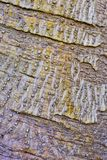 Abstract Camouflage Bark Pattern. Textured camouflage bark pattern with many small raised nodules, Sydney, Australia royalty free stock photo