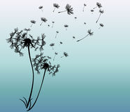 Abstract card with dandelions vector. Background Stock Images