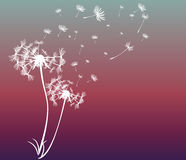 Abstract card with dandelions vector Royalty Free Stock Image