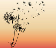 Abstract card with dandelions vector Stock Images