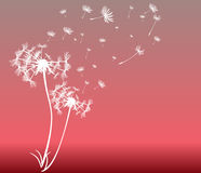 Abstract card with dandelions vector Royalty Free Stock Photos