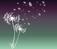 Abstract card with dandelions vector Stock Photography