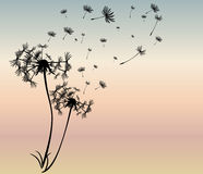 Abstract card with dandelions vector Stock Photos