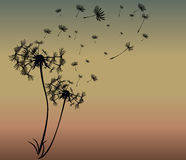Abstract card with dandelions vector Royalty Free Stock Images