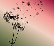 Abstract card with dandelions vector Stock Photo