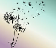 Abstract card with dandelions vector Royalty Free Stock Photo