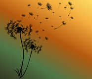 Abstract card with dandelions vector Royalty Free Stock Photography