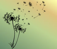 Abstract card with dandelions vector background. Beautiful Stock Photos