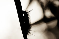 Abstract Caterpillar on Leaf Silhouette Royalty Free Stock Photography