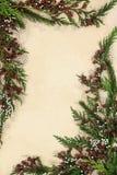 Abstract Cedar Cypress Border Royalty-vrije Stock Fotografie