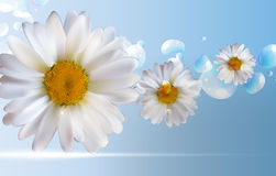 Abstract Chamomile Flowers Natural Spring and Summer Background. 3D Realistic Vector EPS10 Royalty Free Stock Photography
