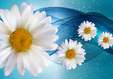 Abstract Chamomile Flowers Natural Spring and Summer Background. 3D Realistic Vector Iillustration EPS10 Stock Photos