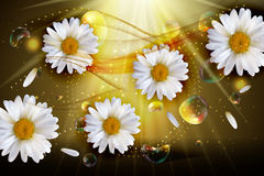 Abstract Chamomile Flowers Natural Spring and Summer Background. 3D Realistic Vector Iillustration EPS10 Royalty Free Stock Photos