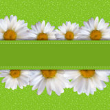 Abstract Chamomile Flowers Natural Spring and Summer Background. 3D Realistic Vector Iillustration EPS10 Royalty Free Stock Images