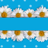 Abstract Chamomile Flowers Natural Spring and Summer Background. 3D Realistic Vector Iillustration EPS10 Stock Image