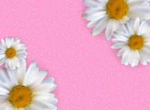 Abstract Chamomile Flowers Natural Spring and Summer Background. 3D Realistic Vector Iillustration EPS10 Royalty Free Stock Image