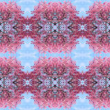 Abstract cherry blossoms pattern background. Royalty Free Stock Image