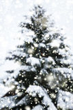 Abstract Christmas Card with Defocused Xmas Tree and sparkling Stock Photo