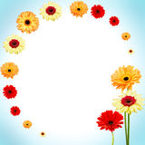 Abstract circle background of gerber flowers. Royalty Free Stock Images