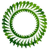 Abstract circle element in green for nature related themes Royalty Free Stock Image