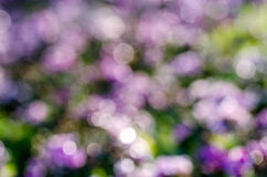 Abstract circular bokeh background of nature Stock Photo