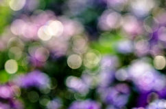 Abstract circular bokeh background of nature Royalty Free Stock Photography