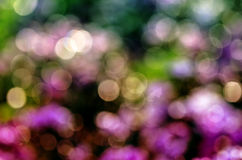 Abstract circular bokeh background of nature Stock Image