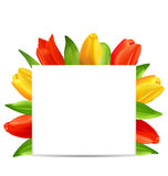 Abstract Clean Card with Bunch of Spring Tulips for Happy Mothers Day Stock Photography