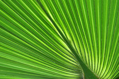 Abstract close up of a green palm leaf Stock Photos