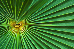 Abstract close-up palm leaf Stock Photography