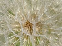 Abstract Close-up photo of a large dandelion seed. Close-up photo of a large dandelion seed Stock Photography