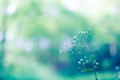 Abstract close-up van madeliefjebloemen De zomerbloemen op natuurlijke bokehachtergrond Royalty-vrije Stock Afbeelding