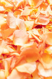 Abstract close up view of orange rose petals Royalty Free Stock Image